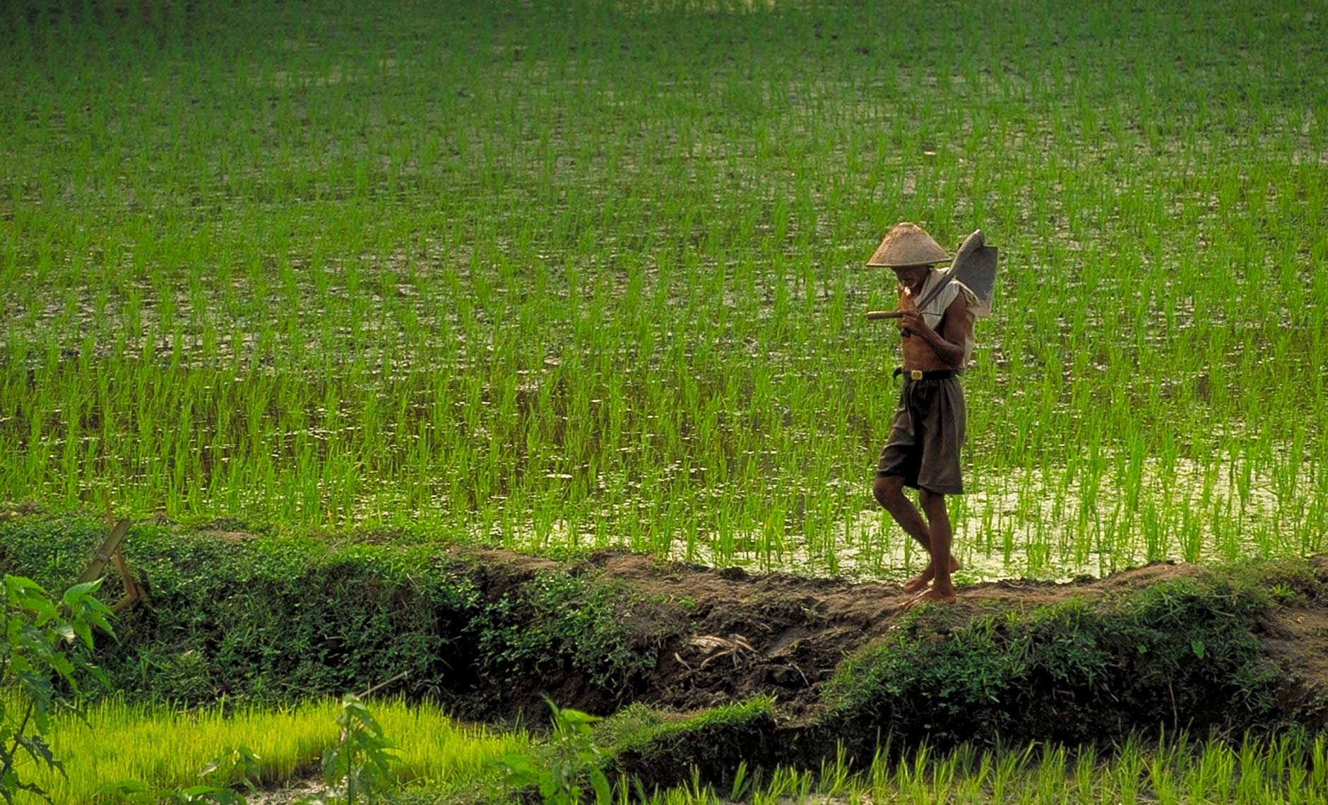 Rice Farmer with shovel in Indonesia