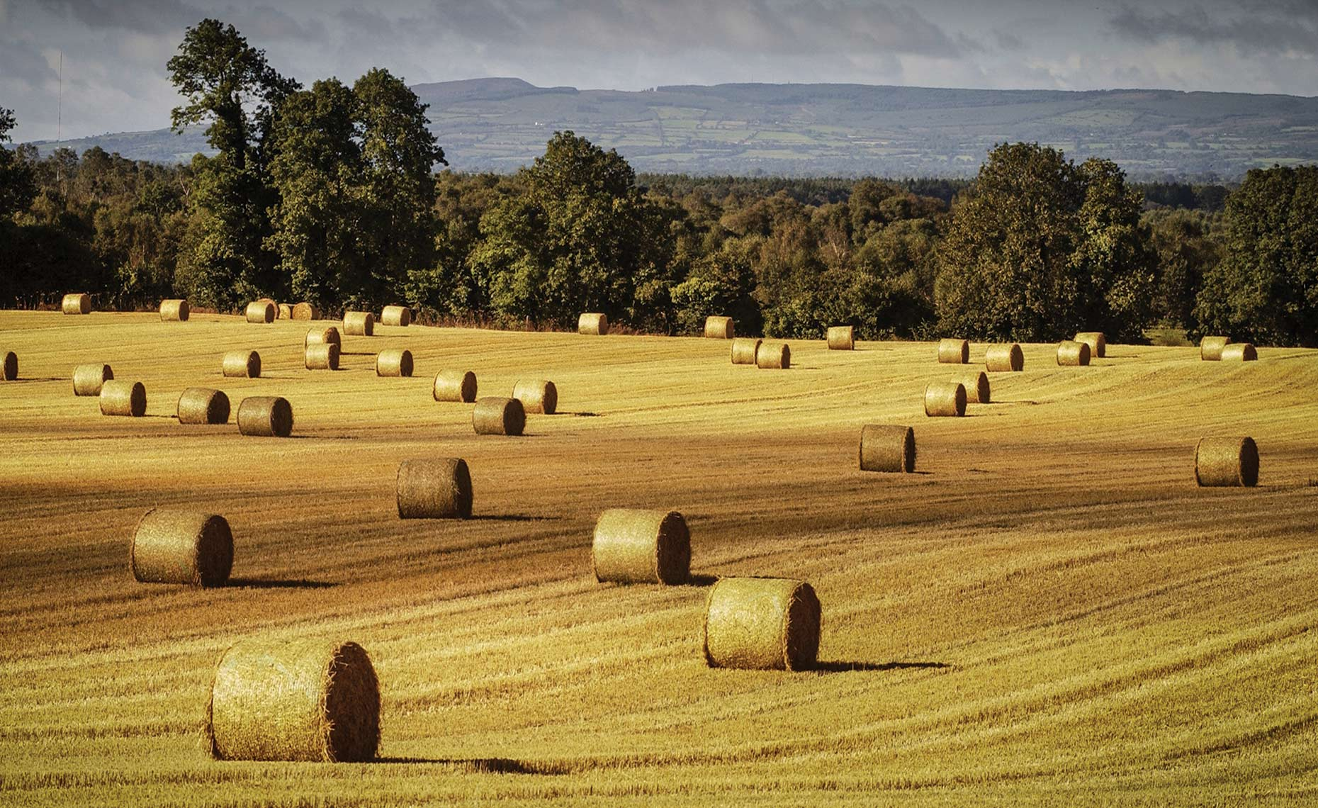 Travel photography showing hay field in Ireland